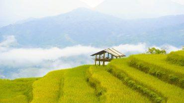 Rice terraces, Easy Riders Vietnam