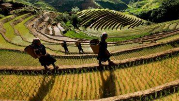 Mu Cang Chai landscape, Easy Riders Vietnam